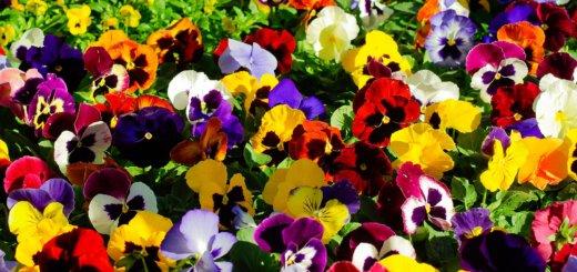 őszi kertészeti napok