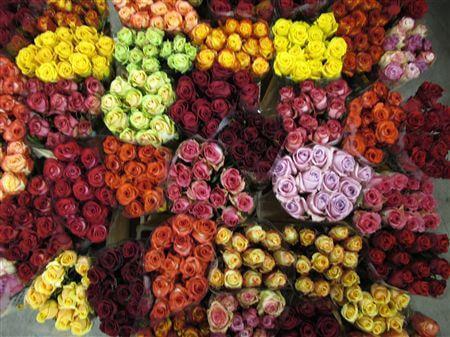 rózsa színének jelentése