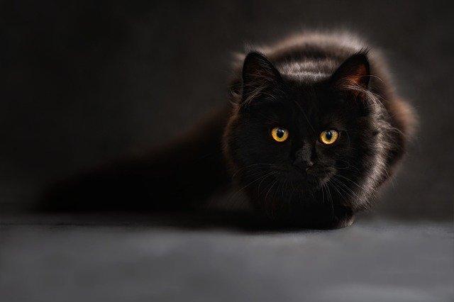 állati babonák - fekete macska