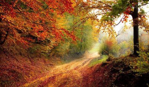 Kányádi Sándor: Novemberi szél