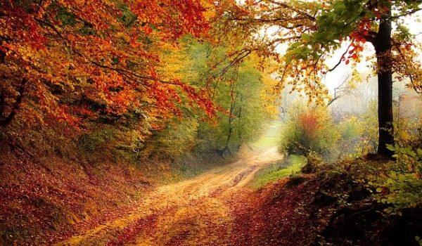 Ady Endre: Az ősz muzsikája