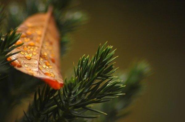 Rainer Maria Rilke: Advent