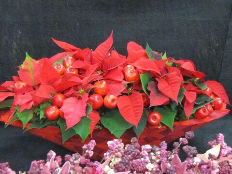 növények a karácsonyi hangulathoz