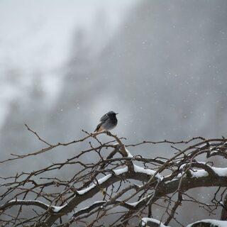 Petőfi Sándor: A puszta télen