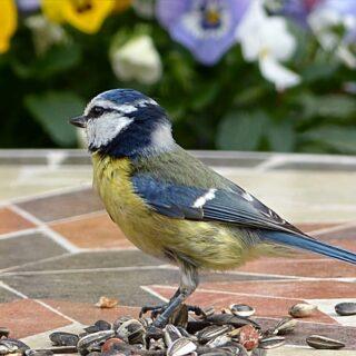tavaszi madárcsicsergés