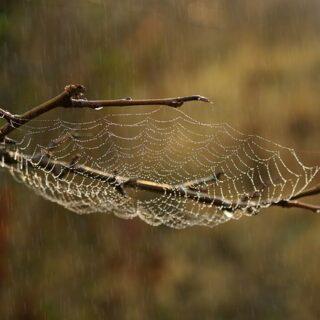 Romhányi József: A pék pókja