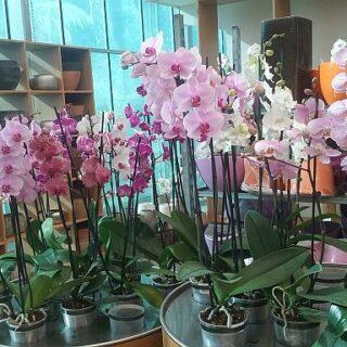 Trópusi orchideafarm Szlovéniában